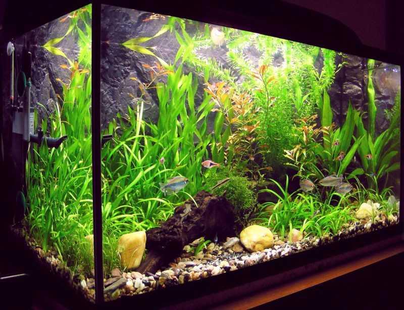 аквариум дома